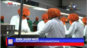 Benin Republic Finds Better Use for Cashew Hard Shell Hitherto Wasted