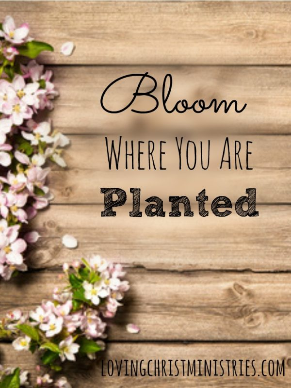 Are you able to bloom where you are planted? We all deal with life's big and little challenges, but it's what we do with them that matters most.