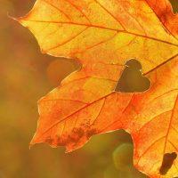 FREE Fall in Love with Jesus Women's Retreat Theme