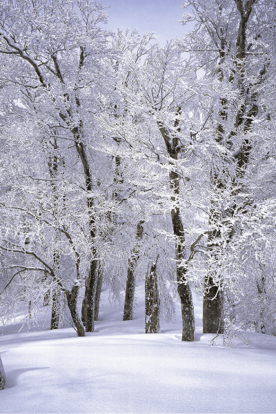 image of icy trees