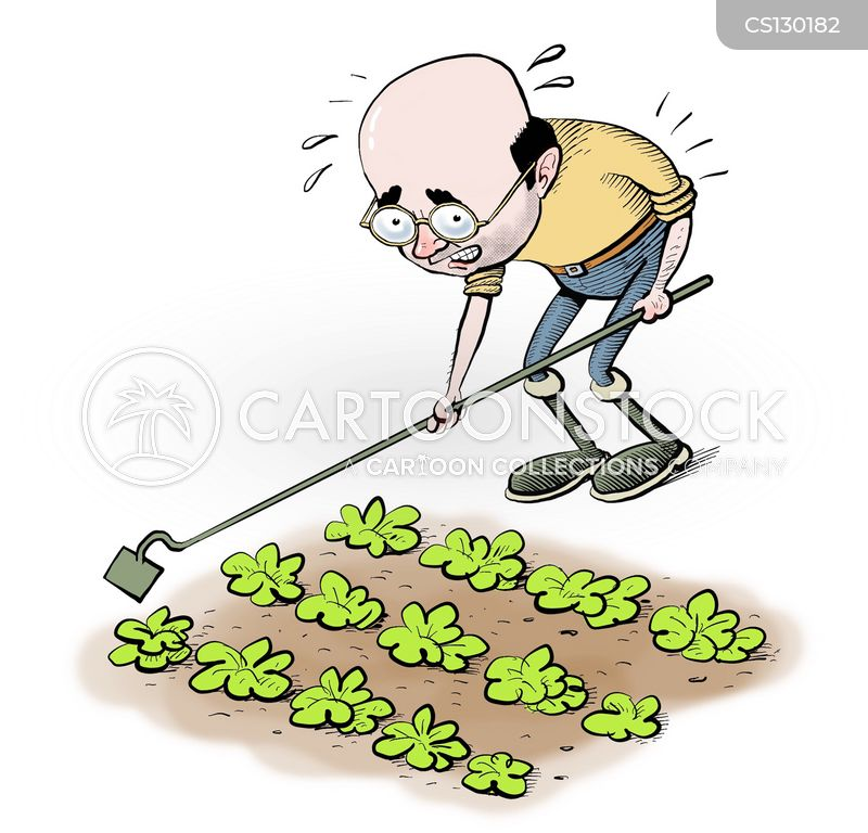 Cabbage cartoons, Cabbage cartoon, funny, Cabbage picture, Cabbage pictures, Cabbage image, Cabbage images, Cabbage illustration, Cabbage illustrations