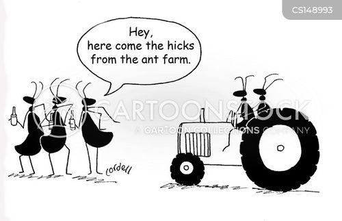 city slickers cartoon
