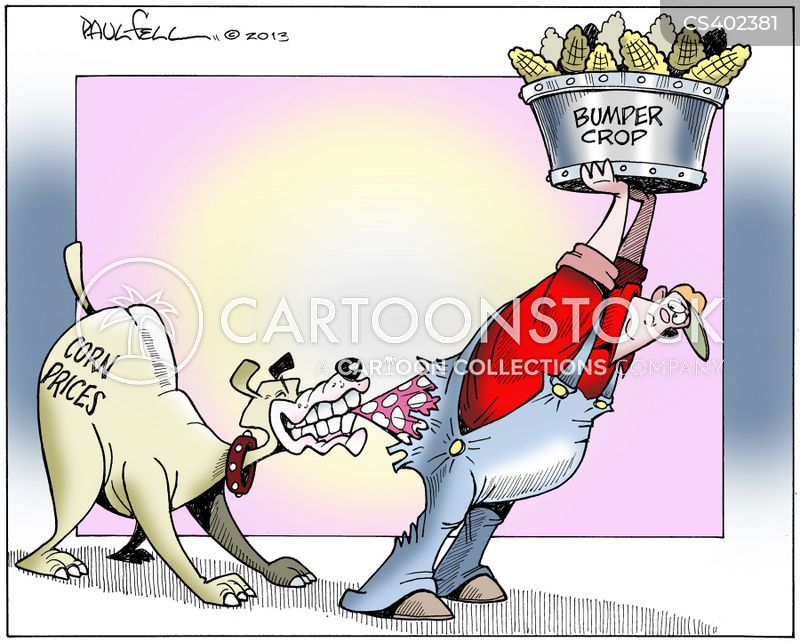 corn price cartoon