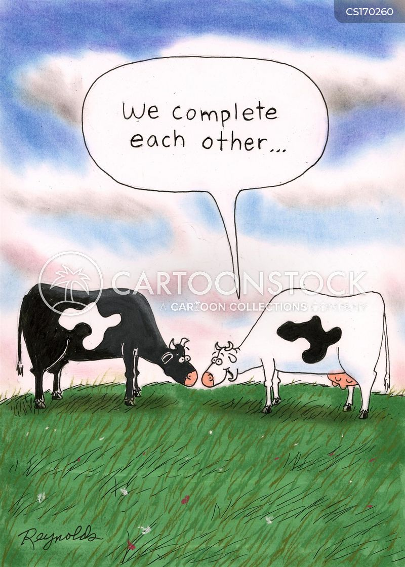 fresian cows cartoon
