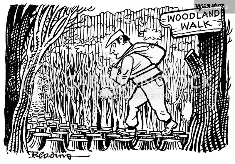 woodland walk cartoon