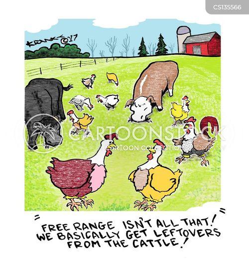 free range farms cartoon