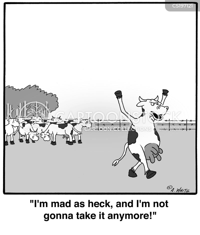mad cows cartoon