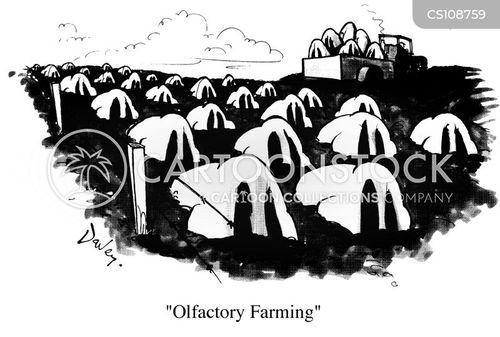 factory farming cartoon