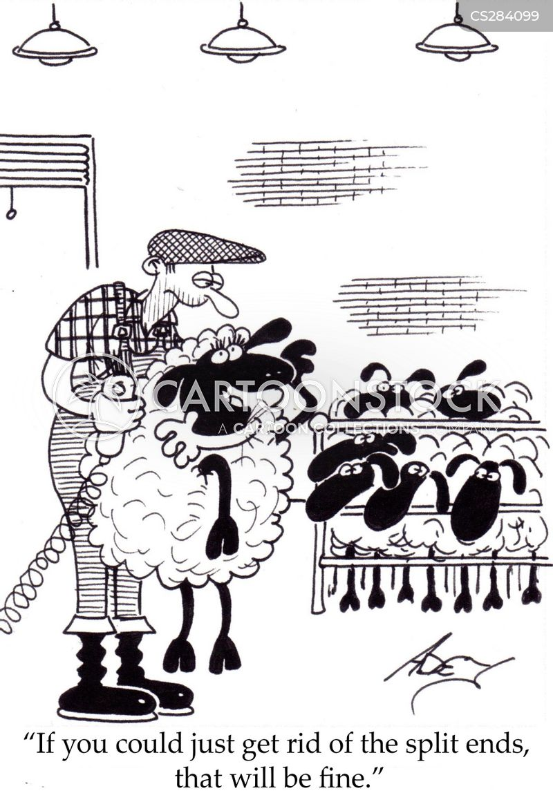 Shearing cartoons, Shearing cartoon, funny, Shearing picture, Shearing pictures, Shearing image, Shearing images, Shearing illustration, Shearing illustrations