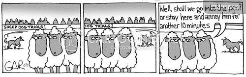 sheepdog cartoon