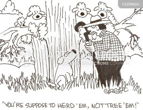 herded cartoon