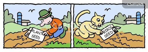 sowing seeeds cartoon