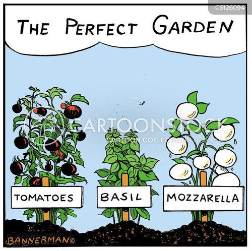 vegetable lover cartoon