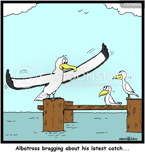 sea bird cartoon