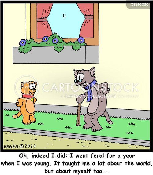 feral cats cartoon