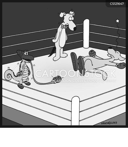 kangeroos cartoon