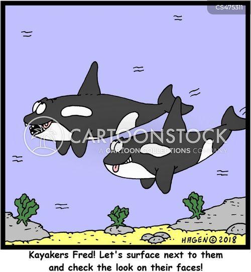 kayaker cartoon