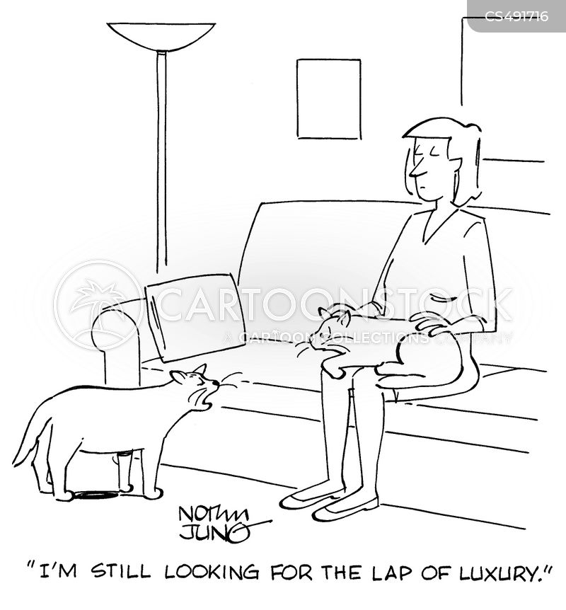 lap cat cartoon