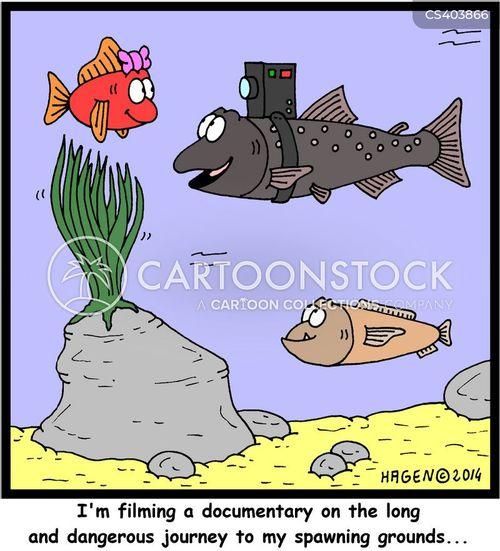 documentary makers cartoons documentary makers cartoon funny