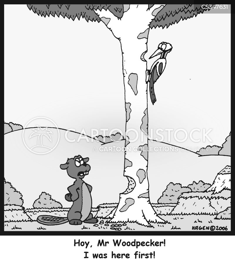wood pecker cartoon