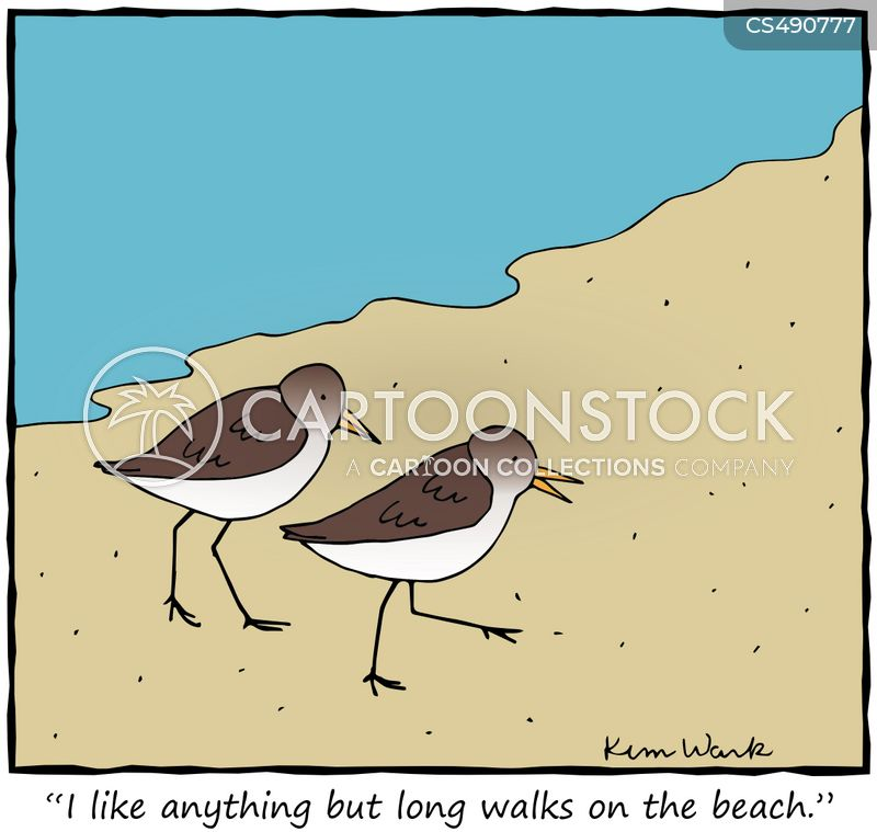 sandpiper cartoon
