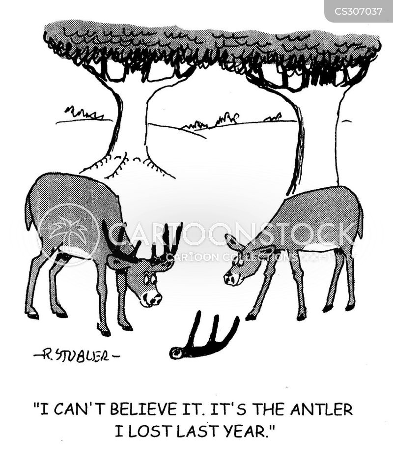 roe deer cartoon