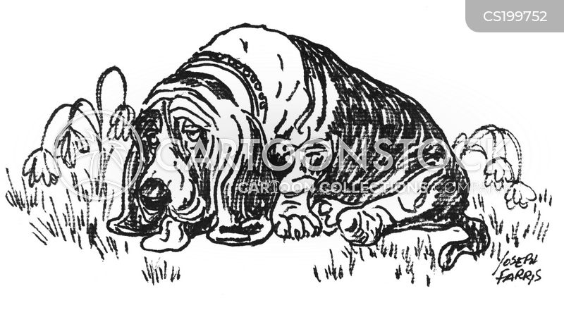 bassets cartoon