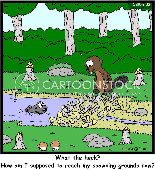 spawning grounds cartoon