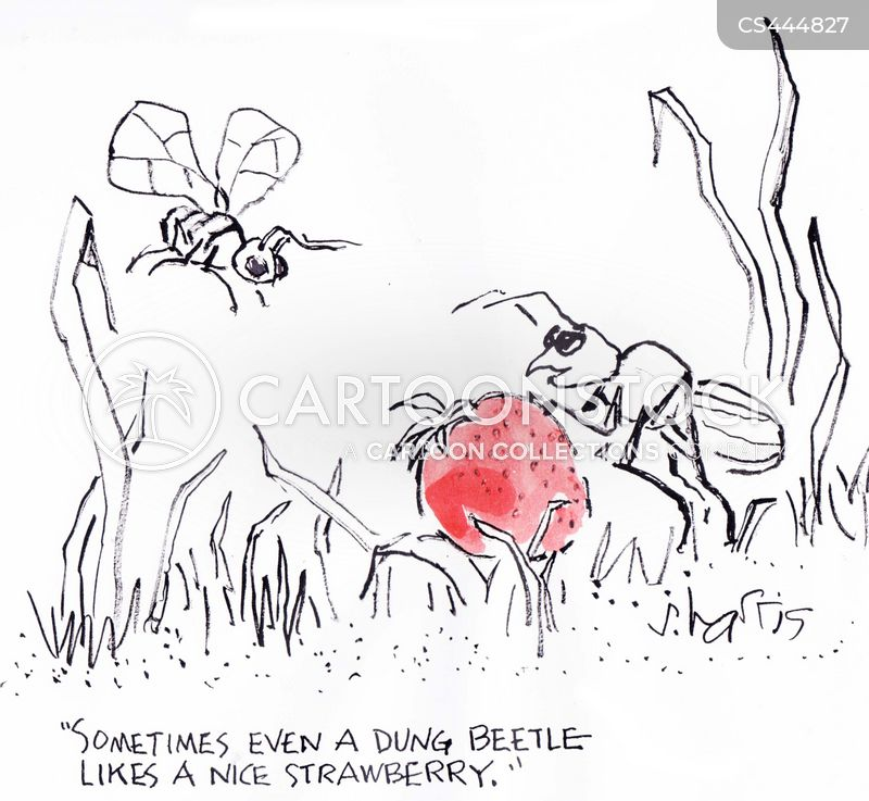 strawberries cartoon