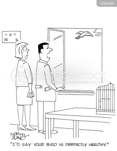 bird owners cartoon