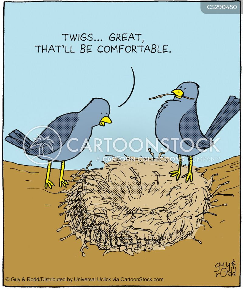 birdy cartoon