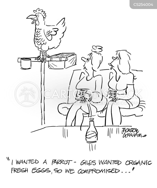talking parrots cartoon