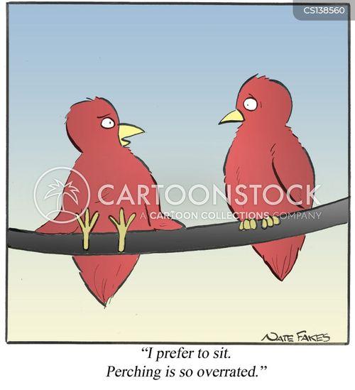 bird perch cartoon