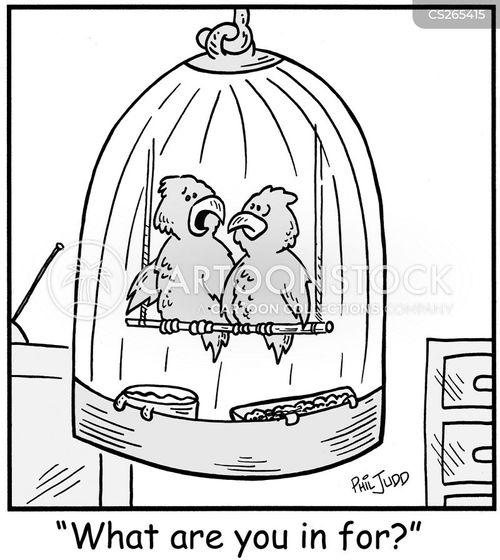 eggshell cartoon