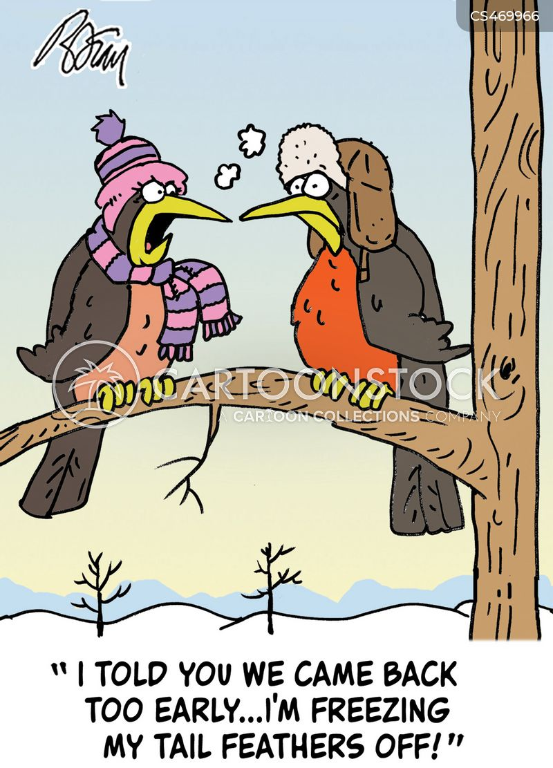 tail feather cartoon