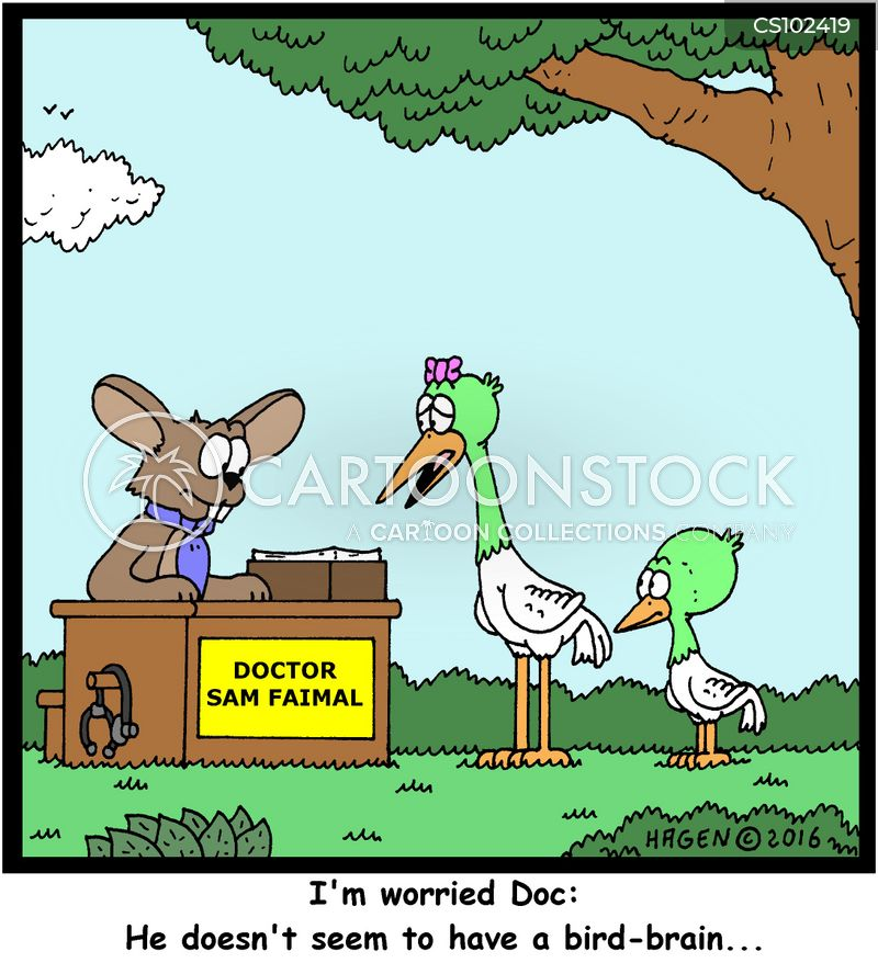 bird brain cartoon