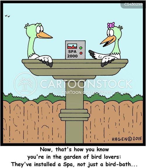 bird gardens cartoon