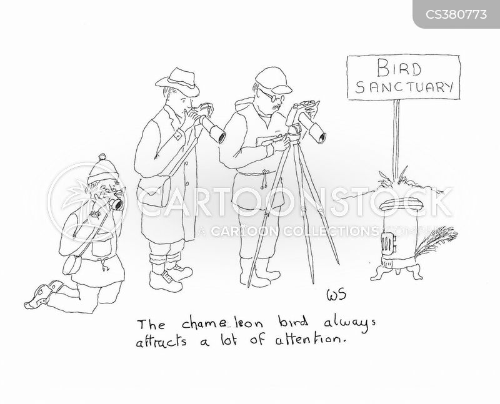 bird sanctuary cartoon