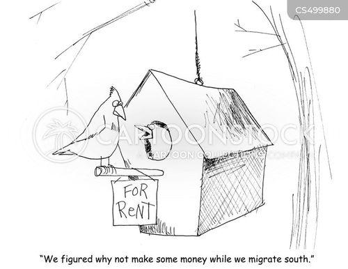 bird-house cartoon