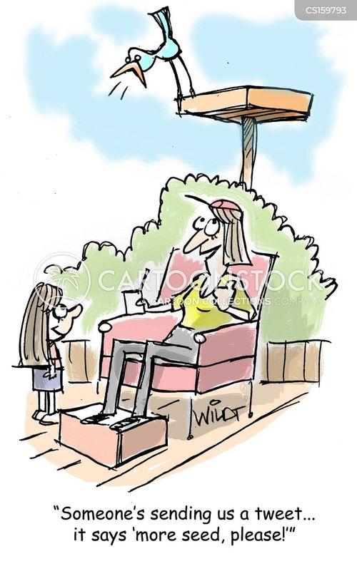 bird-feeder cartoon