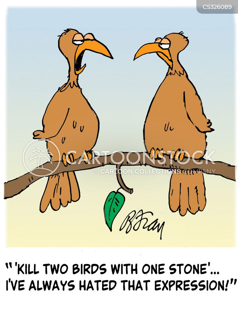 bird hunting cartoon