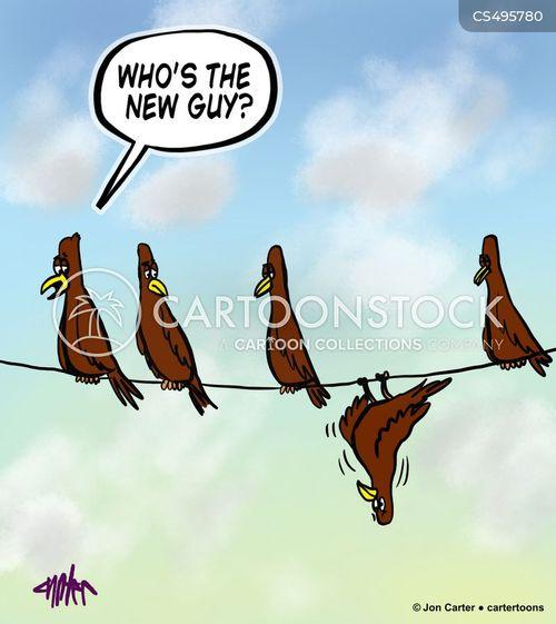 birds on a wire cartoon