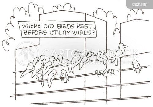 urban birds cartoon