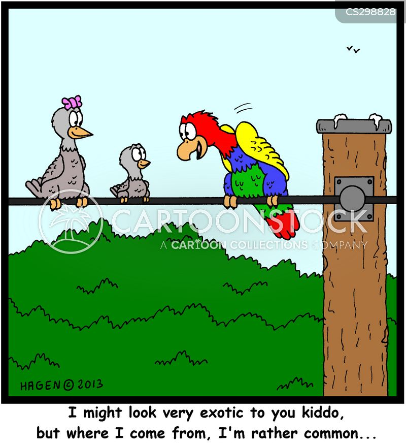 exotic birds cartoon