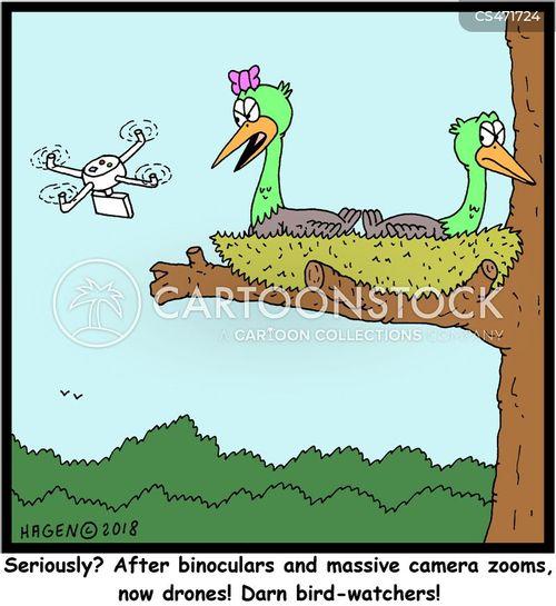 bird nests cartoon