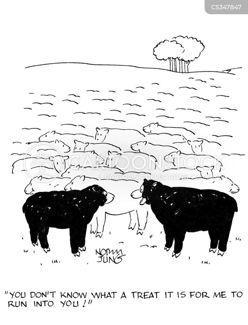 black sheeps cartoon