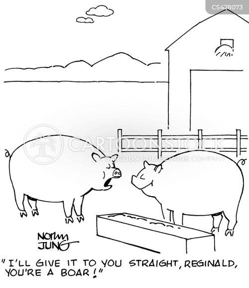 boar cartoon