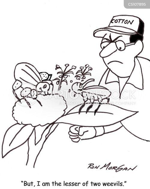weevils cartoon