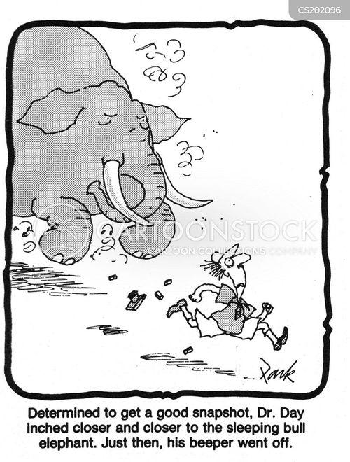 bull elephant cartoon