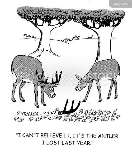 shedded cartoon